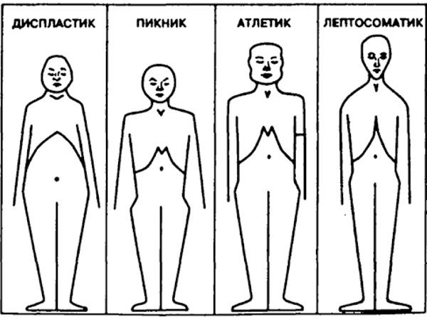 Конституция тела человека. Что это, типы, виды, как определить, тесты
