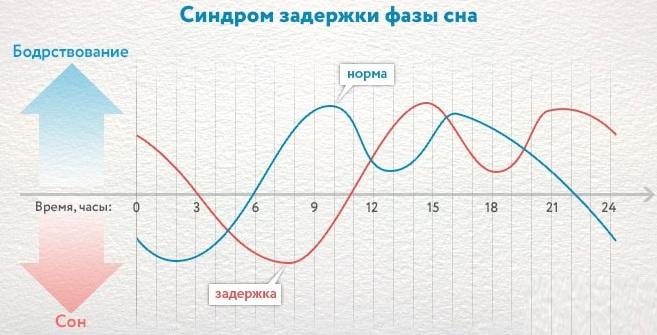 Циркадные ритмы у человека. Что это такое, схема по часам, примеры, регуляция
