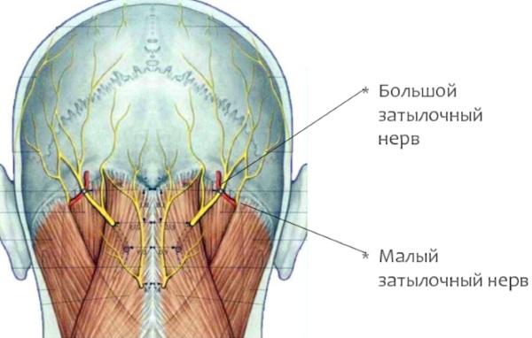 Боль в шее отдает в голову, затылок. Что это значит, чем лечить