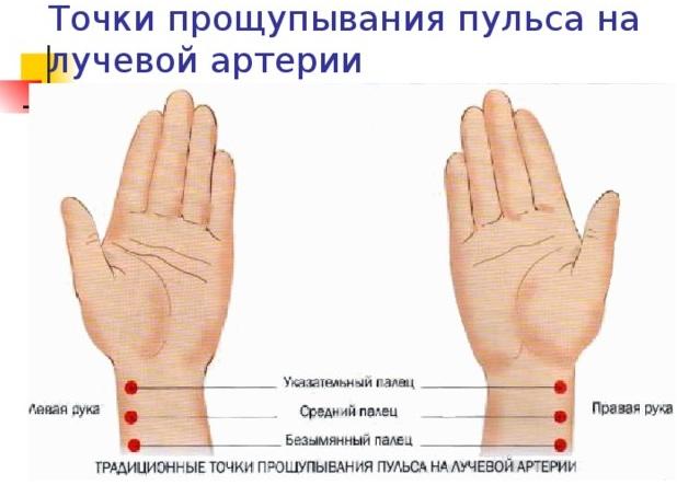 Лучевая артерия на руке. Анатомия, где находится, фото, топография