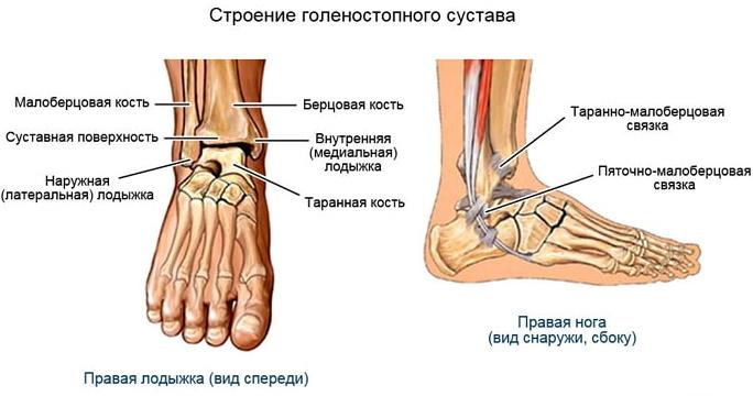 Голеностопный сустав. Фото, где находится, анатомия, кровоснабжение, связки