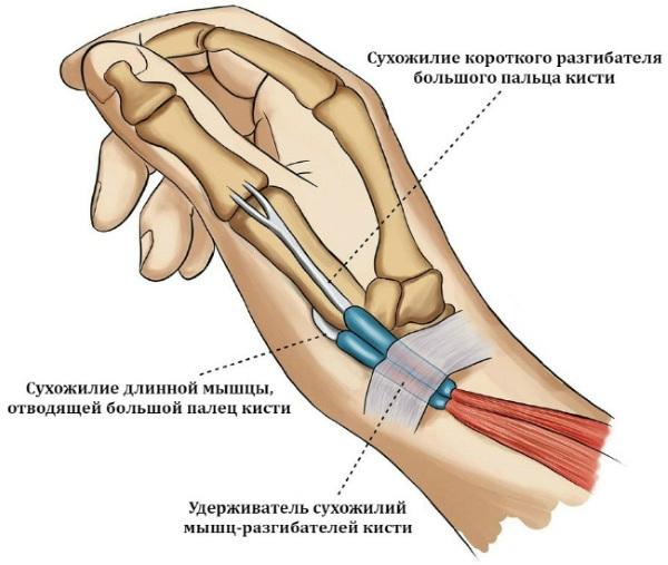Щелкающий палец на руке. Что это такое, лечение без операции, народные средства, причины