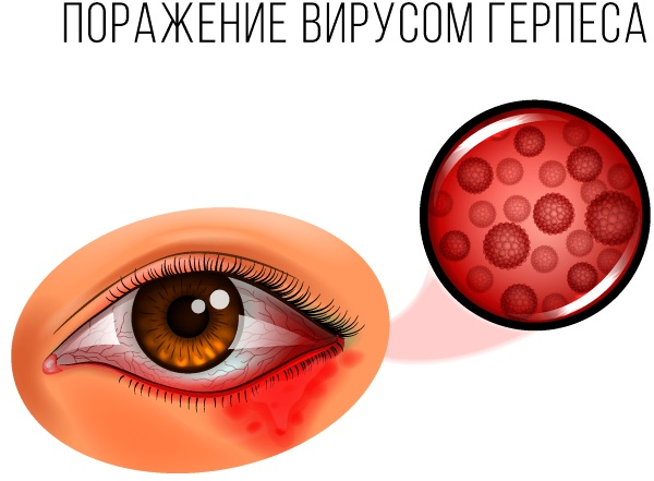 Virgan (Вирган) гель для глаз. Инструкция по применению, отзывы