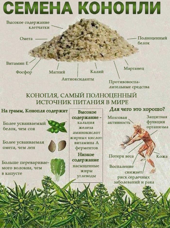 Каннабис (канабис, марихуана). Польза и вред, действие на организм