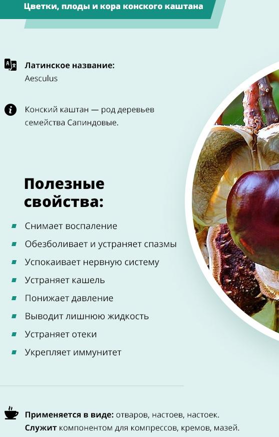 Плоды каштана. Лечебные свойства и применение