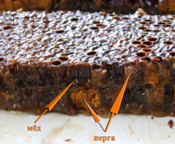 Перга пчелиная пыльца. Польза и вред, лечебные свойства для здоровья